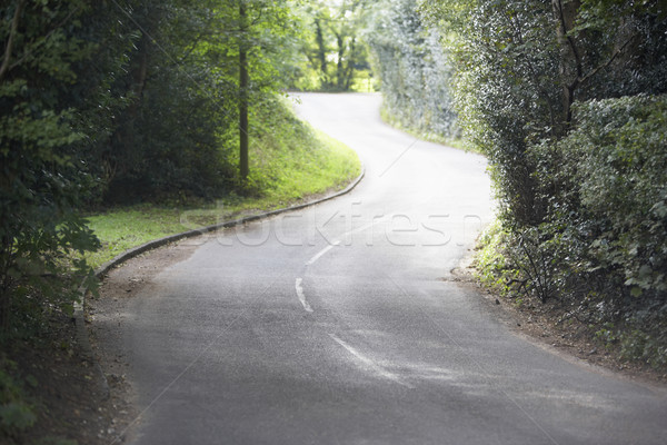 Winding Country Road Sided By Hedges Stock photo © monkey_business