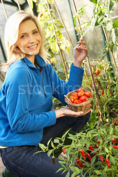 Stok fotoğraf: Genç · kadın · hasat · domates · genç · kişi