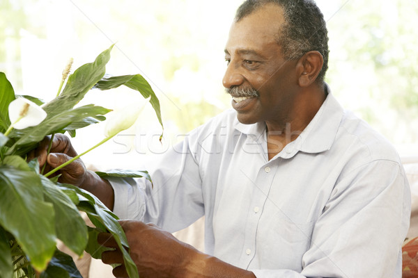 Senior Man Looking After Houseplant Stock photo © monkey_business