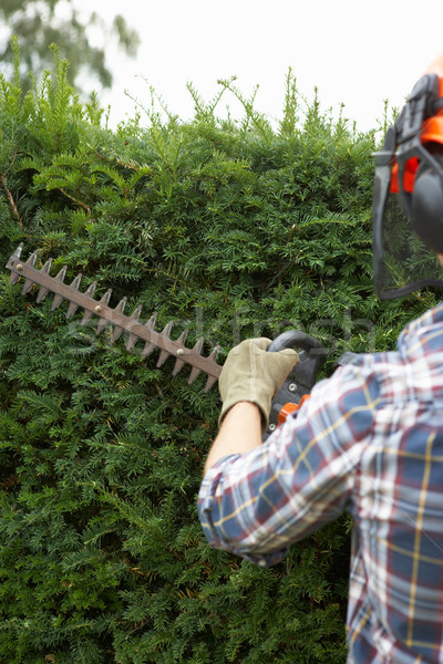 Man trimming hedge Stock photo © monkey_business