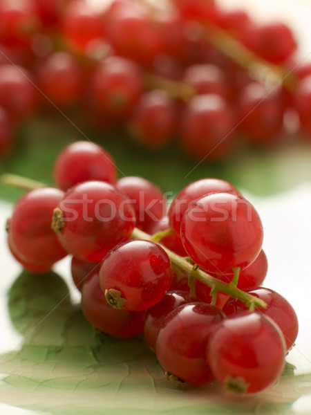 Redcurrants Stock photo © monkey_business