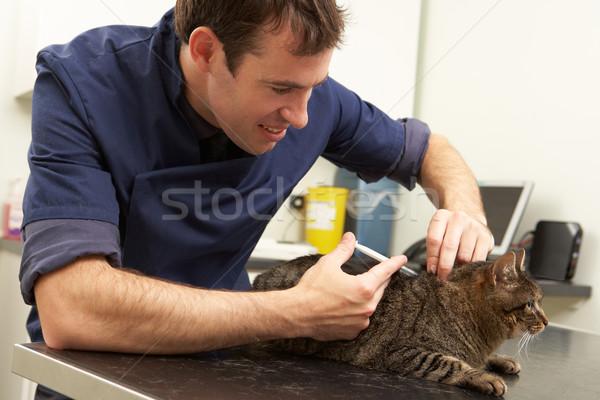 Foto stock: Masculina · veterinario · cirujano · examinar · gato · cirugía