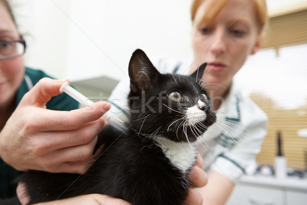 Veterinary Nurse Giving Cat Injection Stock photo © monkey_business