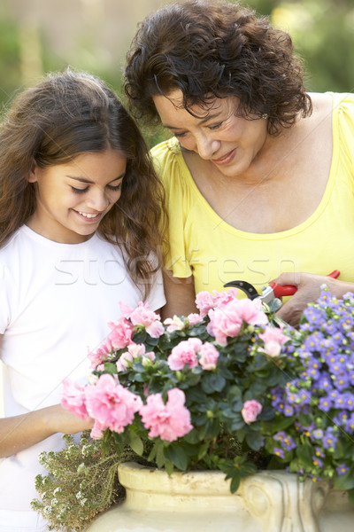 Grandmother And Granddaughter Gardening Together Stock photo © monkey_business
