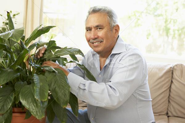 Idős férfi otthon néz nappali növény Stock fotó © monkey_business