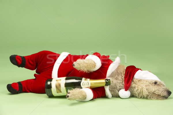 Small Dog In Santa Costume Lying Down With Champagne Bottle Stock photo © monkey_business