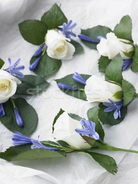 Vak witte steeg bloem bruiloft liefde Stockfoto © monkey_business