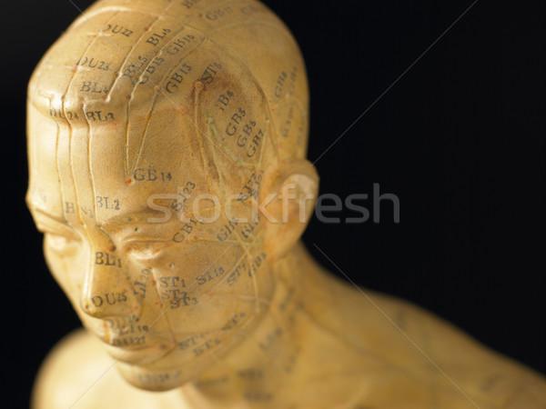 Meridiano linhas acupuntura estatueta saúde cor Foto stock © monkey_business