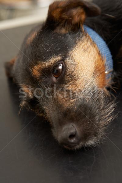 Chien table vétérinaire chirurgie Homme personne Photo stock © monkey_business