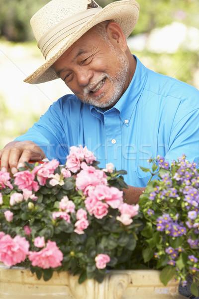 Stock fotó: Idős · férfi · kertészkedés · kert · kalap · személy