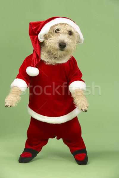 Small Dog In Santa Costume Stock photo © monkey_business