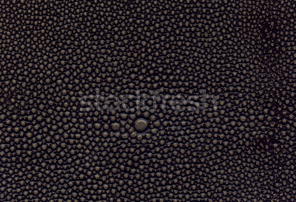 brown leather texture Stock photo © montego