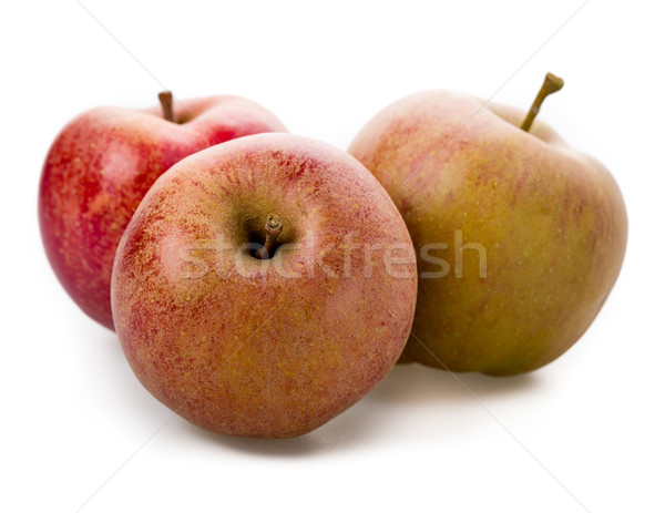 Apple variety, Boskoop Stock photo © Moradoheath
