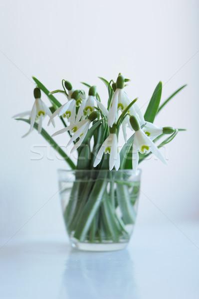 Flores vaso janela flor primavera folha Foto stock © Moravska