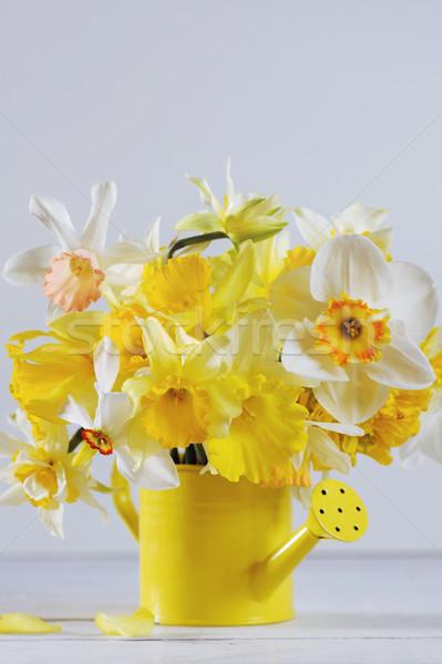 Primavera colorido narcisos completo florescer branco Foto stock © Moravska