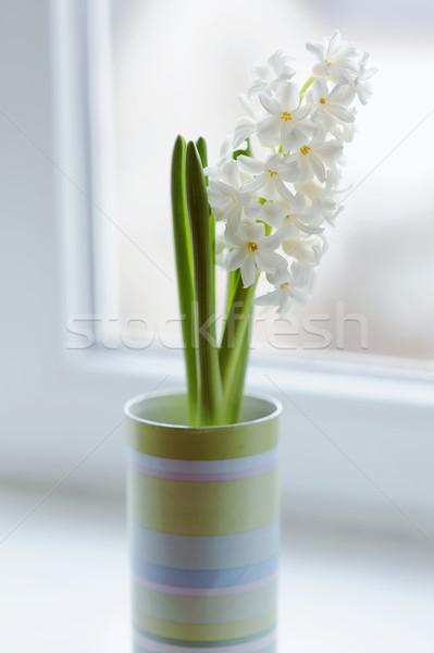 Belo branco jacinto vaso janela flor Foto stock © Moravska