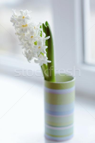 Güzel beyaz sümbül vazo pencere çiçek Stok fotoğraf © Moravska