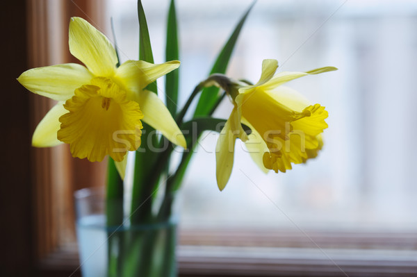 Foto stock: Amarelo · abrótea · flores · vaso · janela · primavera