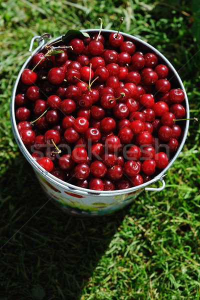 Colored bucket of cherries on a wooden table outdoor Stock photo © Moravska