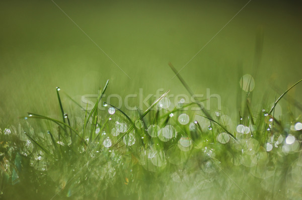 Close up of fresh morning dew on spring grass Stock photo © Moravska