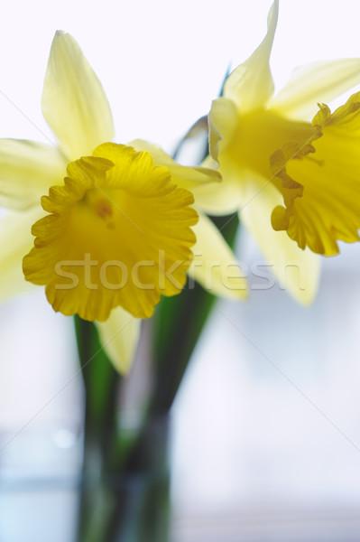 Amarelo abrótea flores vaso janela primavera Foto stock © Moravska