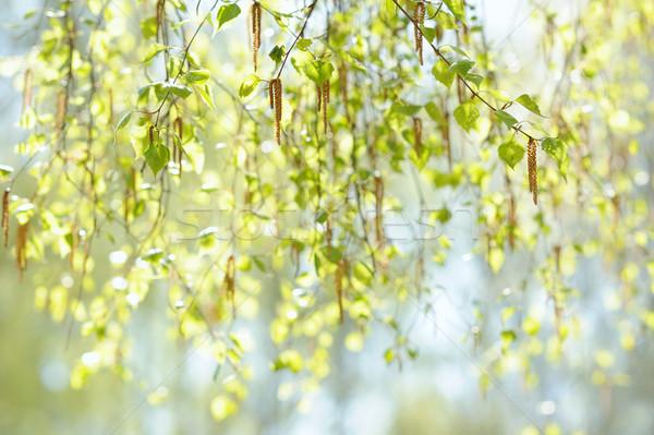 Naturales frescos primavera ramita atención selectiva resumen Foto stock © Moravska