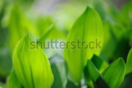 Foto stock: Naturalismo · fresco · folhas · verdes · luz · solar · sol · luz