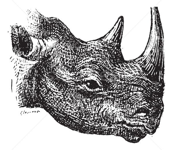 Czarny nosorożec vintage wyryty ilustracja stron Zdjęcia stock © Morphart