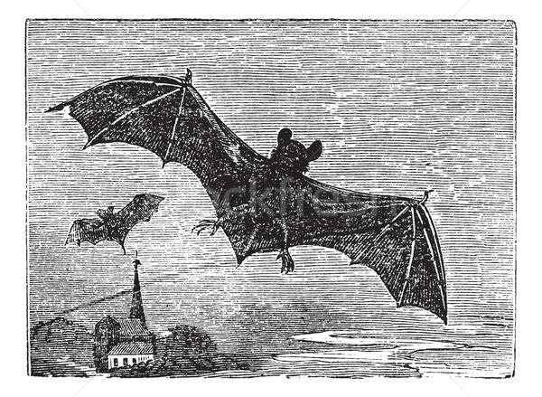 Common Bat vintage engraving Stock photo © Morphart