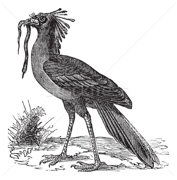 ヴィンテージ 彫刻 秘書 鳥 古い 刻ま ストックフォト © Morphart