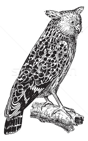 Bubo ketupu or Buffy fish owl, vintage engraving. Stock photo © Morphart