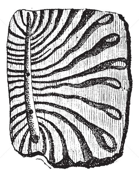 Bogár ugatás klasszikus gravírozott illusztráció szótár Stock fotó © Morphart