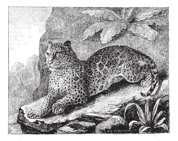 Jaguar Vintage иллюстрация словарь Сток-фото © Morphart
