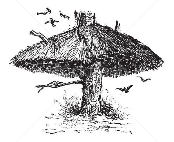 Community Nest of the Social Weaver or Philetairus socius, vinta Stock photo © Morphart
