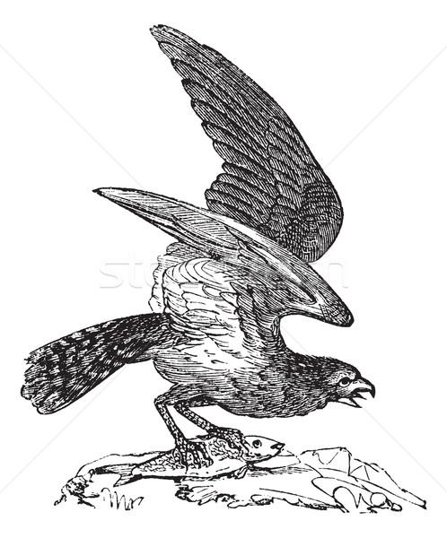 América peces águila mar halcón vintage Foto stock © Morphart