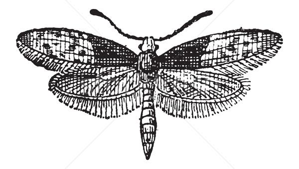 Stock fotó: Pillangó · klasszikus · vésés · gravírozott · illusztráció · szótár