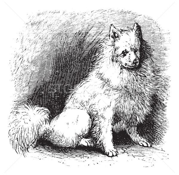 Husky Vintage старые иллюстрация Сток-фото © Morphart