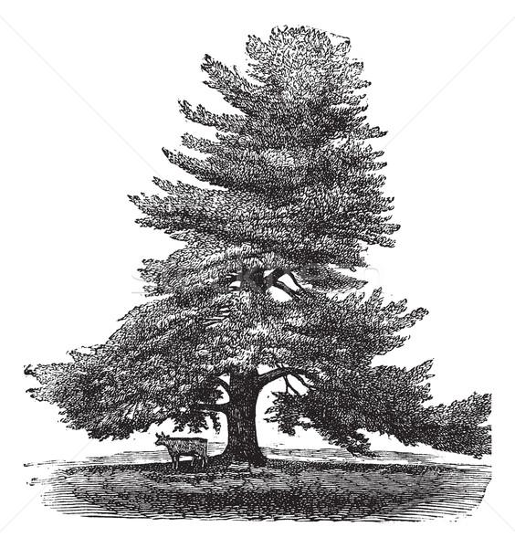 Keleti fehér fenyőfa klasszikus vésés északi Stock fotó © Morphart