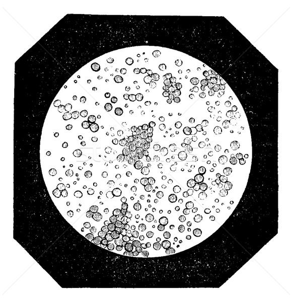 Grasa microscopio vintage grabado ilustración Foto stock © Morphart