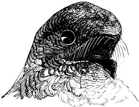 ストックフォト: ヴィンテージ · 彫刻 · フクロウ · オウム · 古い · 刻ま