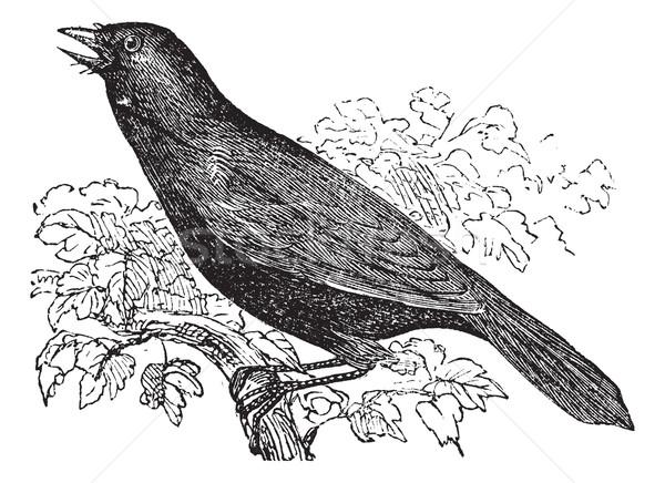 гигант птица Vintage иллюстрация Сток-фото © Morphart