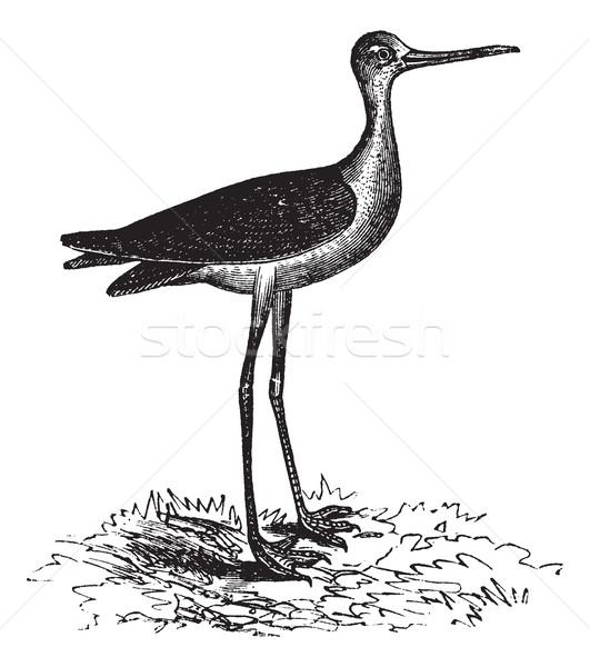 Stock fotó: Klasszikus · vésés · öreg · gravírozott · illusztráció · madár