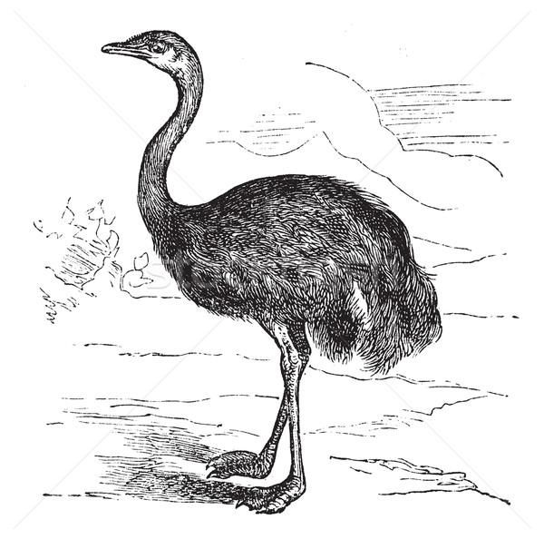 Vintage inciso illustrazione enciclopedia uovo uccello Foto d'archivio © Morphart