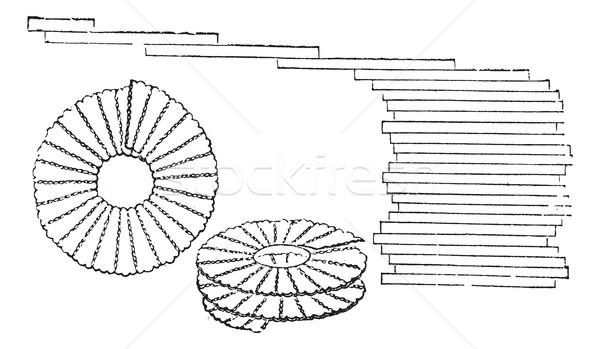 Diatoms, vintage engraved illustration Stock photo © Morphart