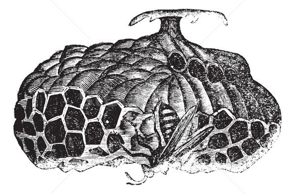 Kâğıt arı vespa şemsiye bağbozumu oyma Stok fotoğraf © Morphart