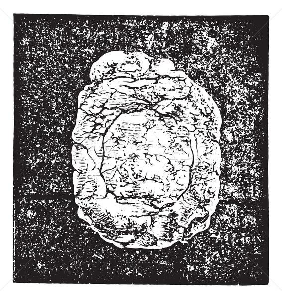 Számítás nátrium hólyag méret klasszikus gravírozott Stock fotó © Morphart