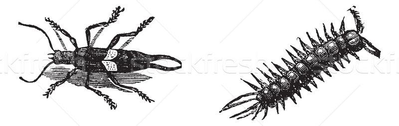 Avrupa kahverengi doğru bağbozumu oyulmuş örnek Stok fotoğraf © Morphart