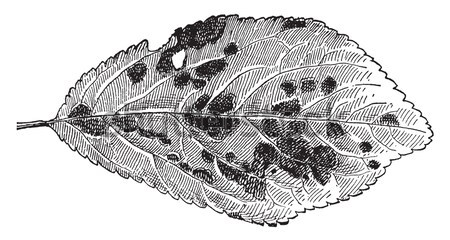 Hematite or Haematite iron, vintage engraving. Stock photo © Morphart