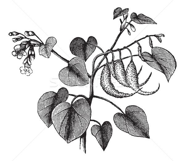 Boynuz bağbozumu oyma pençe bitki eski Stok fotoğraf © Morphart