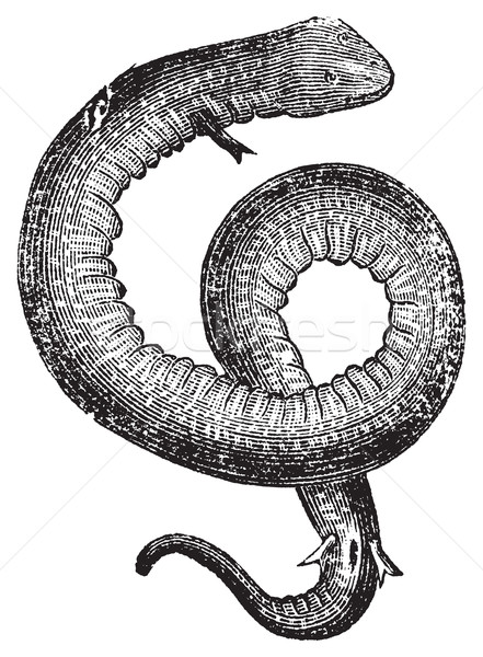 Congo serpente vintage vecchio inciso Foto d'archivio © Morphart
